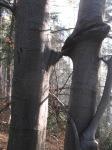 12.11.2011 Pocalunek w Beskidach - autor: wrozka Maria Bucardi