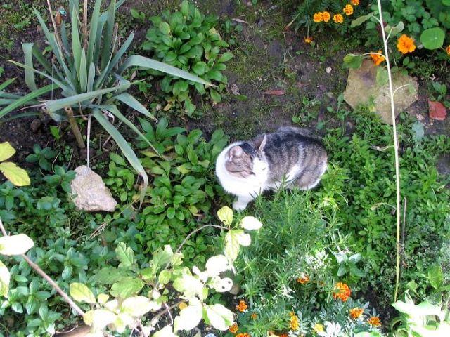 Ogrodek magicznych ziol Barbary