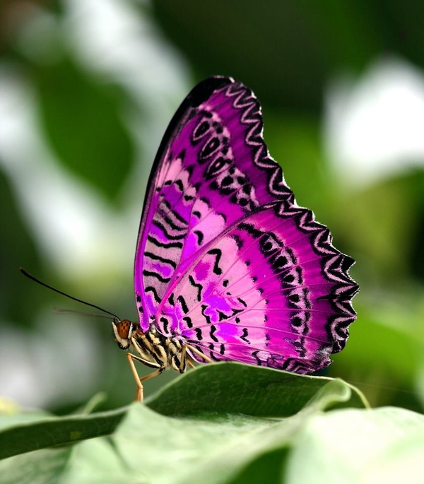 nature-butterfly-violet-Favim.com-471308