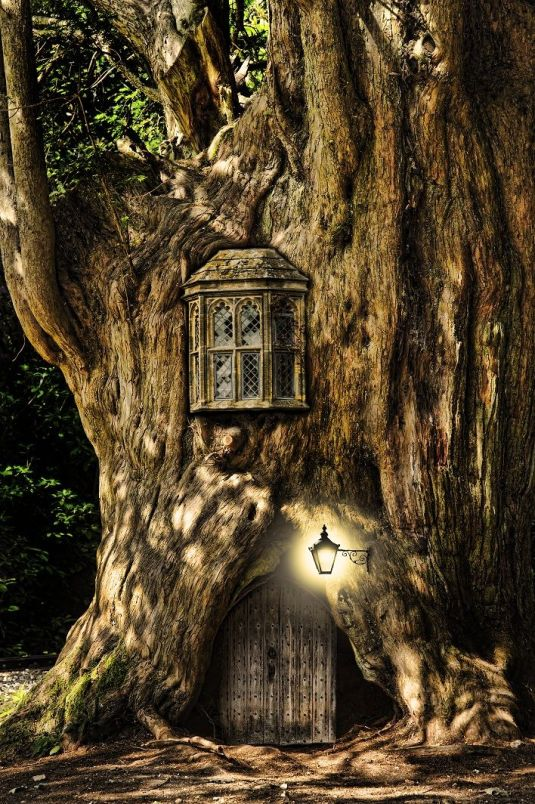 Fairytale fantasy house in tree trunk in forest