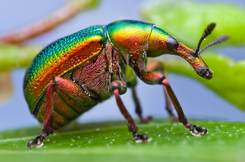insects-closeup-03