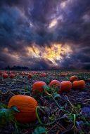 samhain2015_bucardi