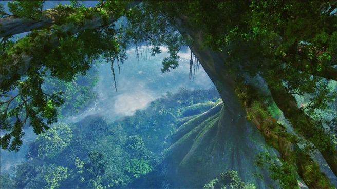 drzewa1