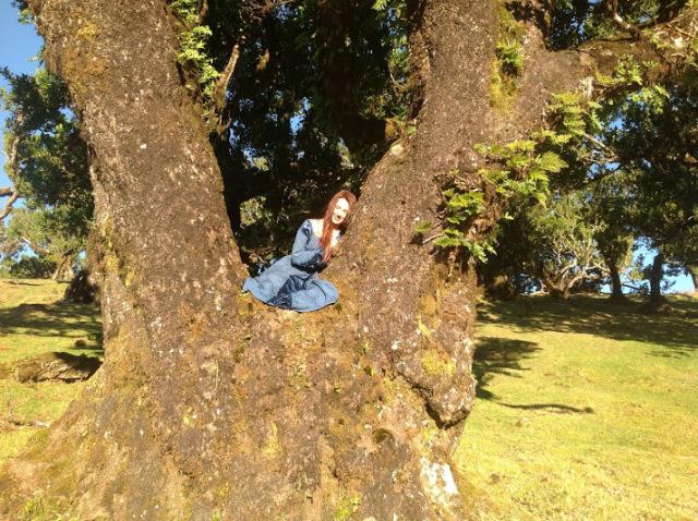 maria_bucardi1_drzewa.jpg